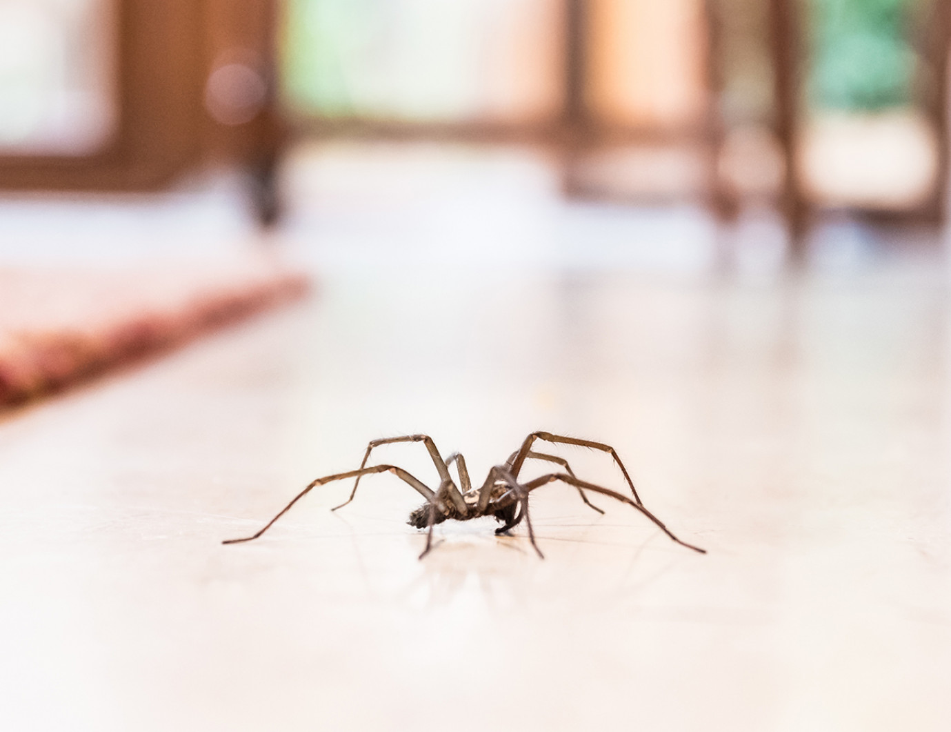 Do Vacuums Kill Spiders?